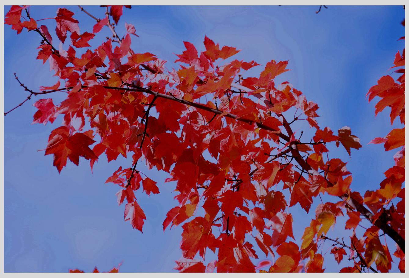 风光] 叶到红时勘比花—实拍美国东部深秋红叶_图1-26