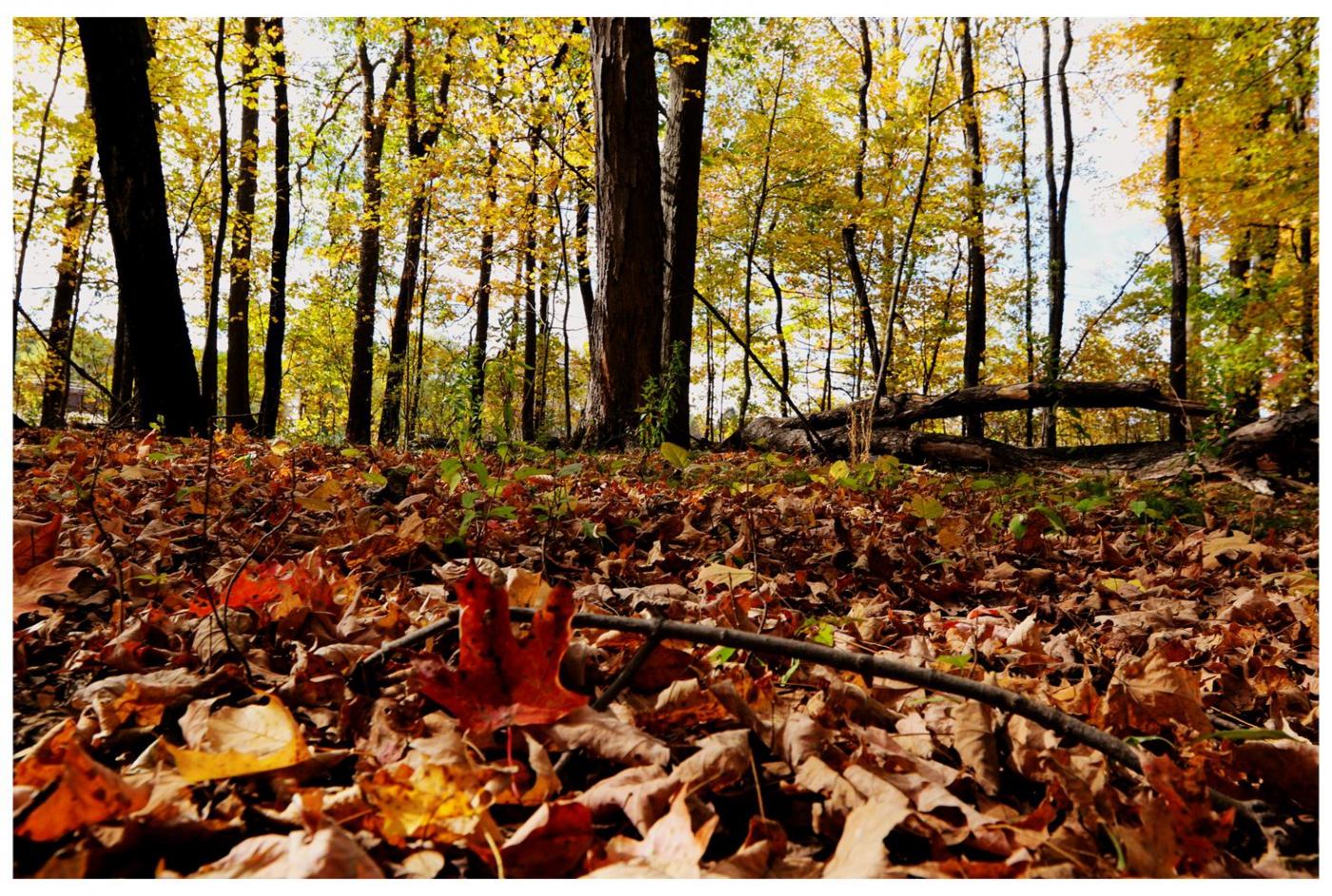 风光] 叶到红时勘比花—实拍美国东部深秋红叶_图1-27