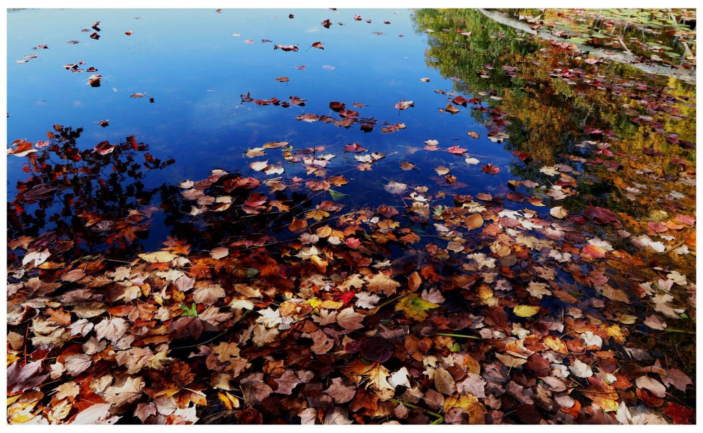 风光] 叶到红时勘比花—实拍美国东部深秋红叶_图1-28