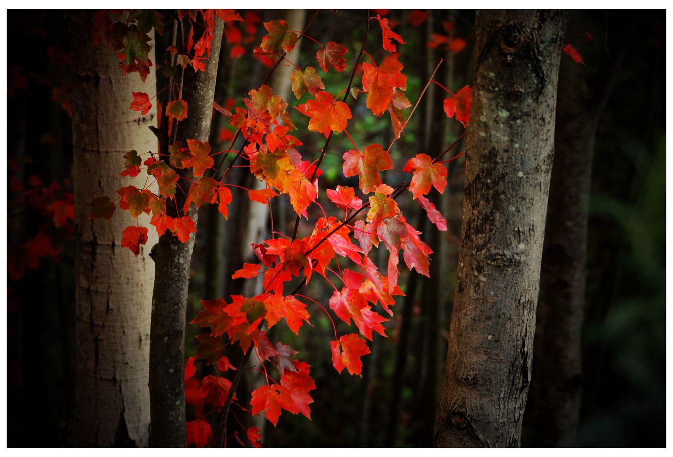 风光] 叶到红时勘比花—实拍美国东部深秋红叶_图1-29