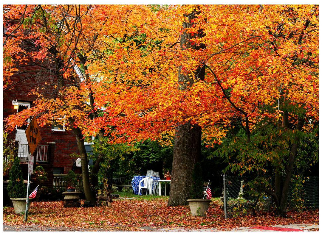 风光] 叶到红时勘比花—实拍美国东部深秋红叶_图1-31