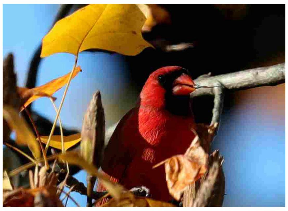 风光] 叶到红时勘比花—实拍美国东部深秋红叶_图1-32