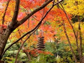 京都常寂光寺红叶