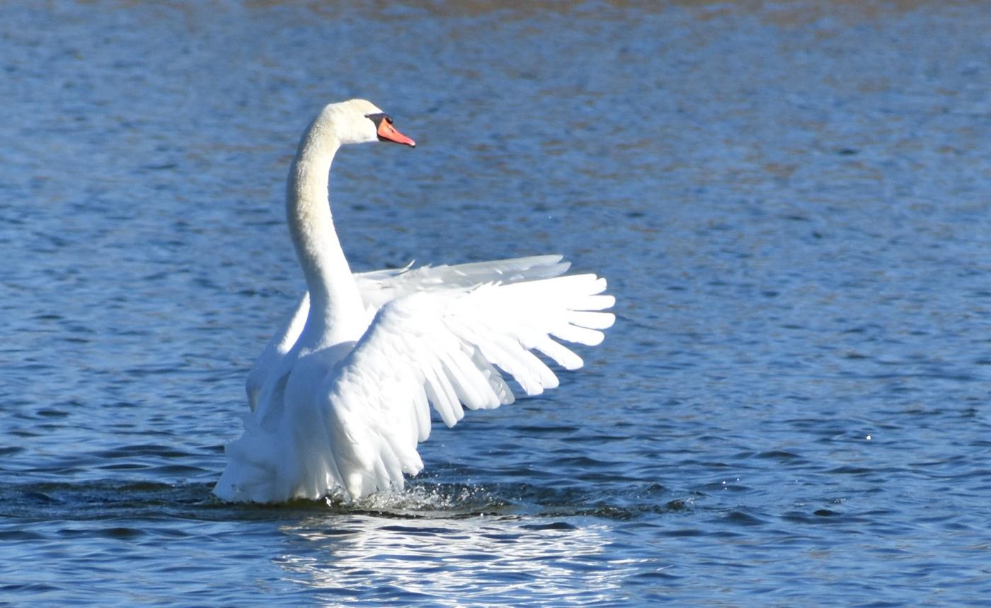 水上芭蕾舞 (2)