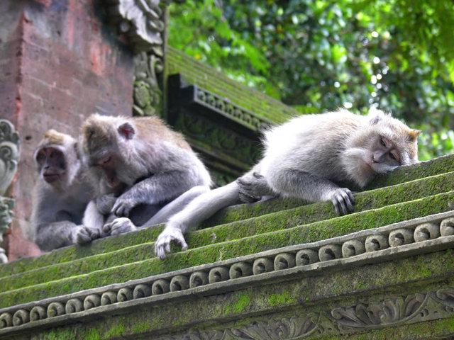 印尼萨拉斯瓦蒂寺.乌布王宫_图1-12