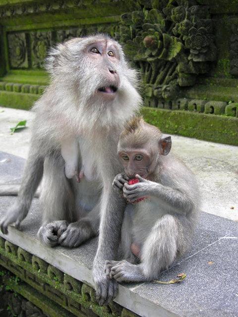 印尼萨拉斯瓦蒂寺.乌布王宫_图1-13
