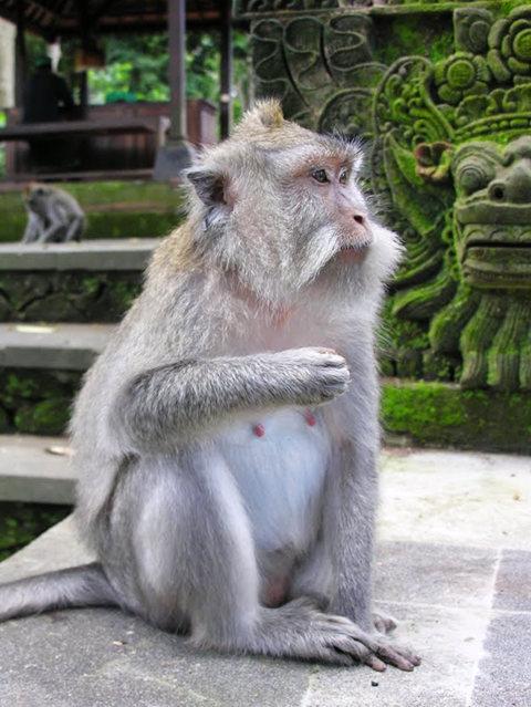 印尼萨拉斯瓦蒂寺.乌布王宫_图1-16