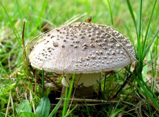 史岛蘑菇_图1-15