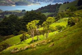 新西兰掠影(一)