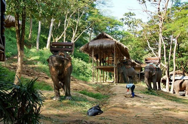清迈大象营地_图1-5