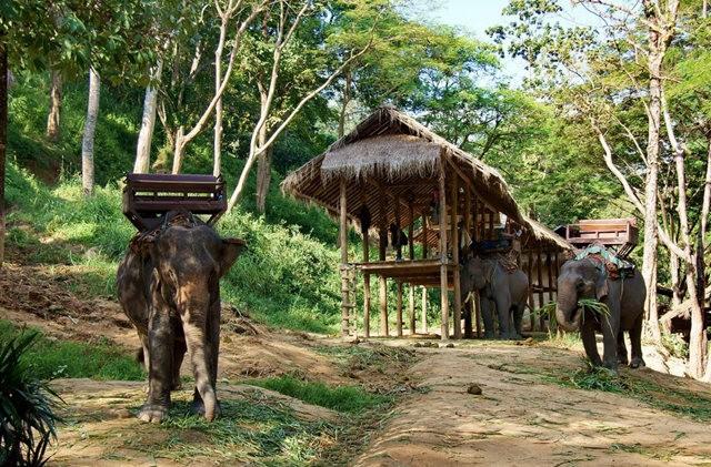 清迈大象营地_图1-6