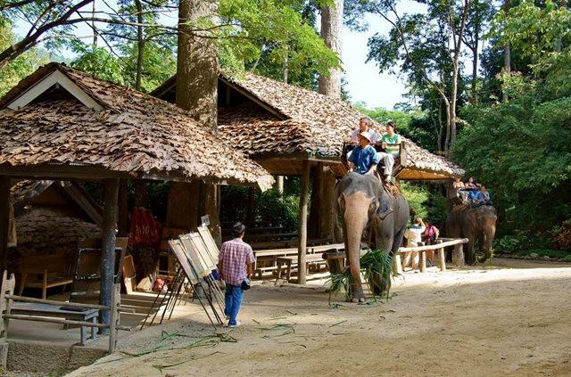 清迈大象营地_图1-7
