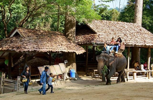 清迈大象营地_图1-8