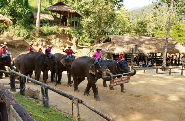 清迈大象营地_图1-9