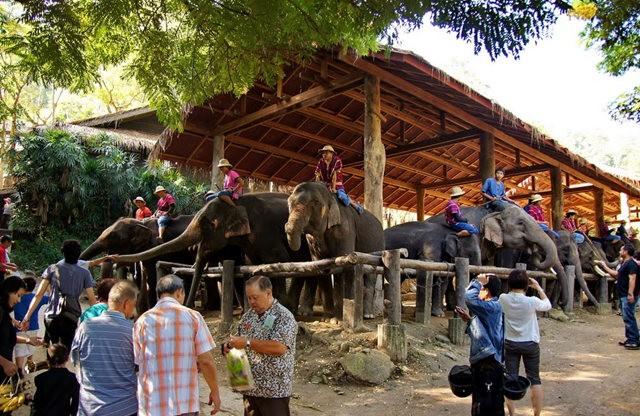 清迈大象营地_图1-10