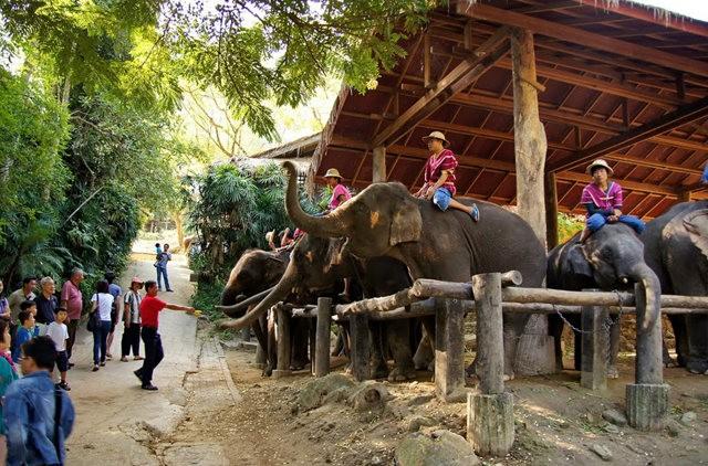 清迈大象营地_图1-11