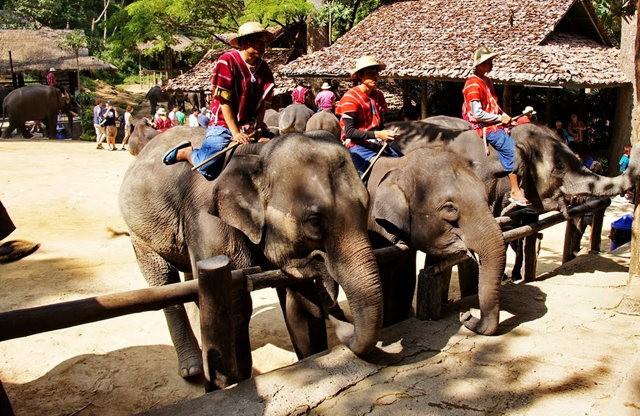 清迈大象营地_图1-12