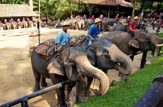 清迈大象营地_图1-13
