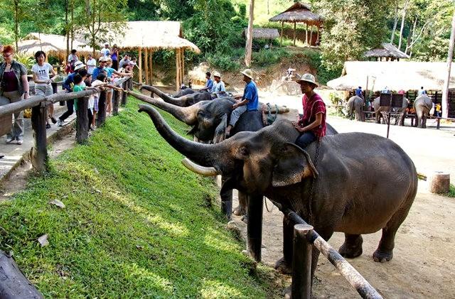 清迈大象营地_图1-14