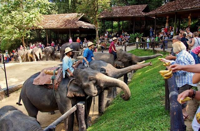 清迈大象营地_图1-15