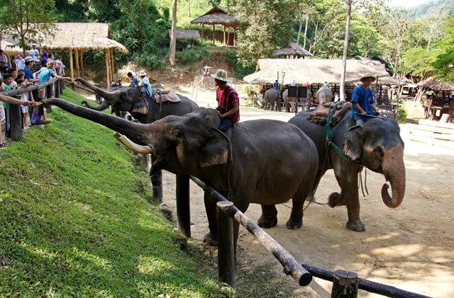 清迈大象营地_图1-16