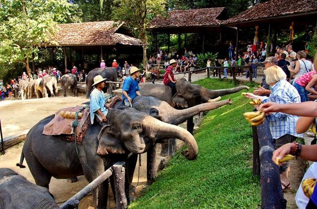 清迈大象营地_图1-19