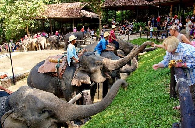 清迈大象营地_图1-18