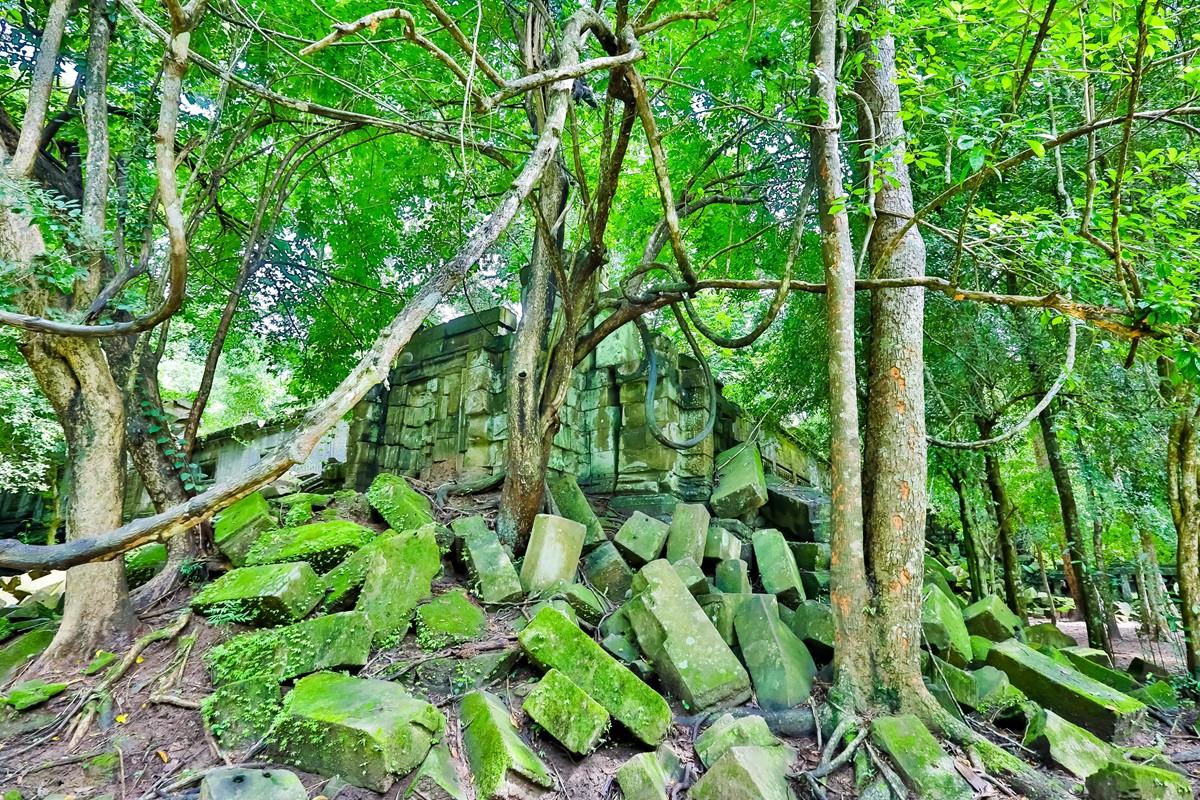 【杆说杆摄】崩密列 失落在原始丛林中的绿色王国 这里是摄影人的天堂 ..._图1-5