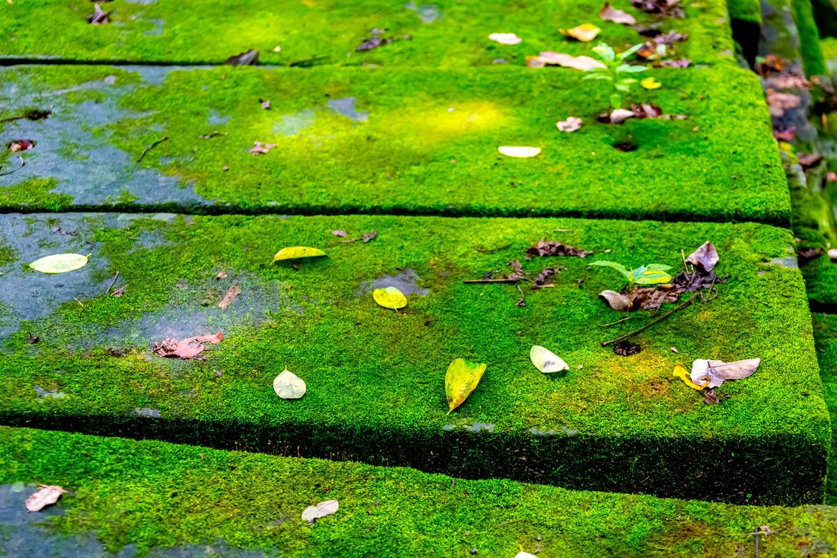 【杆说杆摄】崩密列 失落在原始丛林中的绿色王国 这里是摄影人的天堂 ..._图1-20