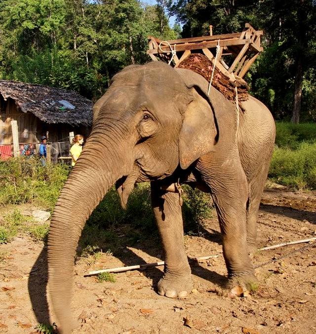 参观大象村_图1-1