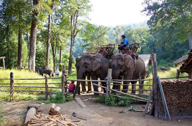 参观大象村_图1-3