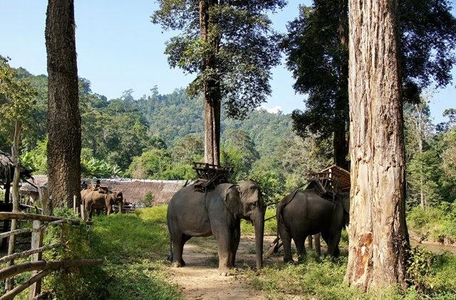 参观大象村_图1-4