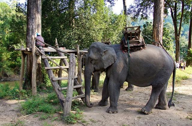 参观大象村_图1-5