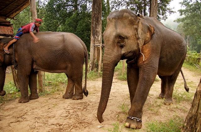 参观大象村_图1-7