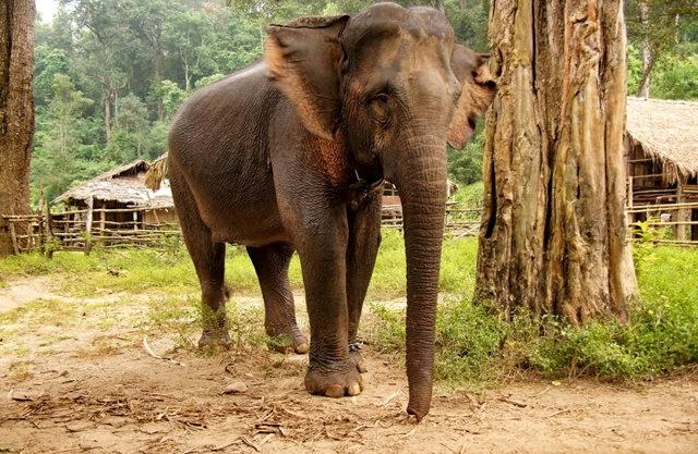 参观大象村_图1-8