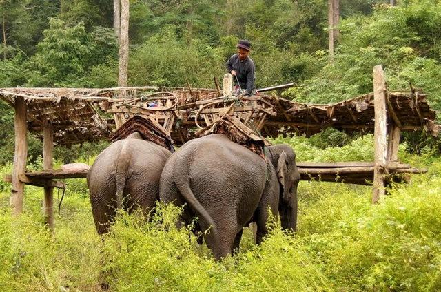 参观大象村_图1-10
