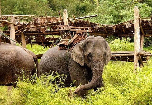 参观大象村_图1-11