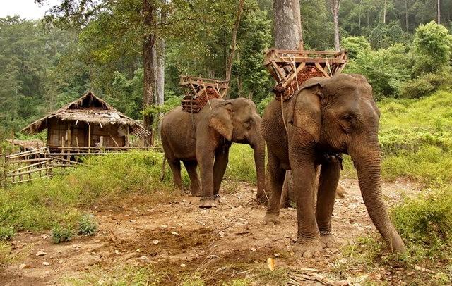 参观大象村_图1-12