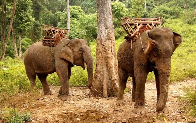 参观大象村_图1-13