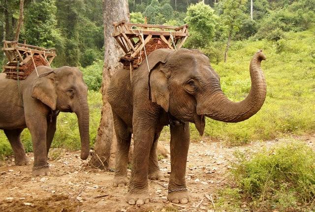 参观大象村_图1-15