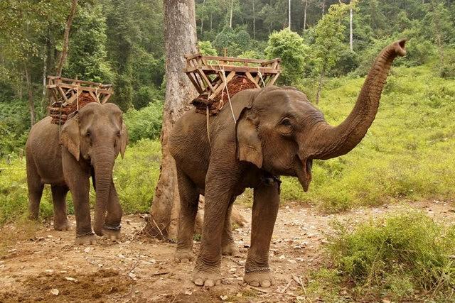 参观大象村_图1-16