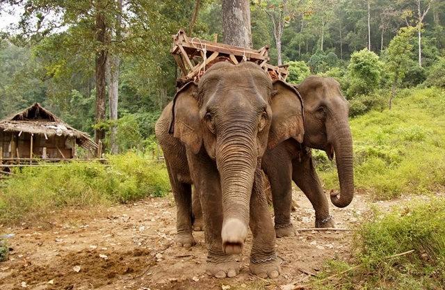 参观大象村_图1-17