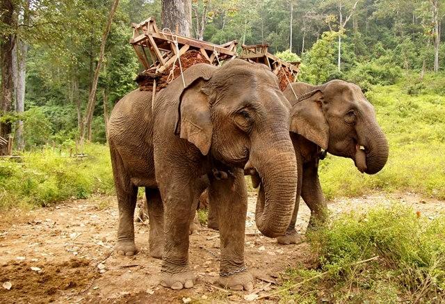 参观大象村_图1-18