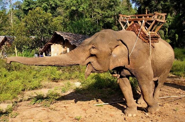 参观大象村_图1-19