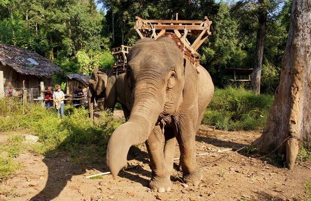 参观大象村_图1-20