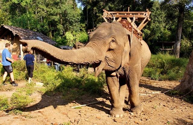 参观大象村_图1-21
