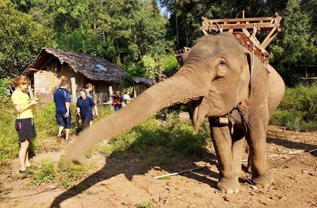 参观大象村_图1-22