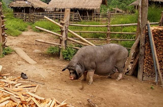 参观大象村_图1-24
