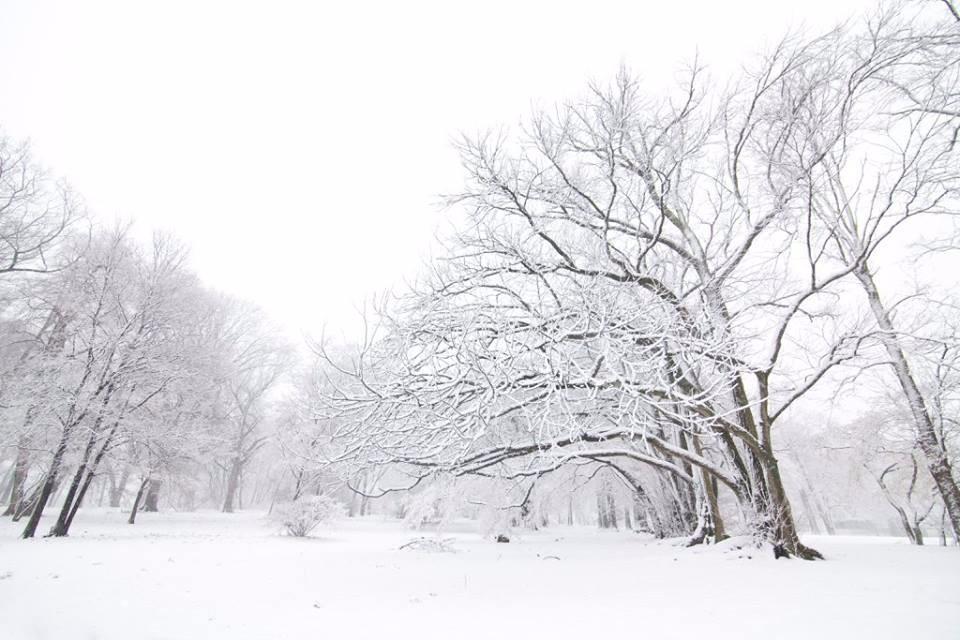 【爱摄影】雪花纷飞_图1-7