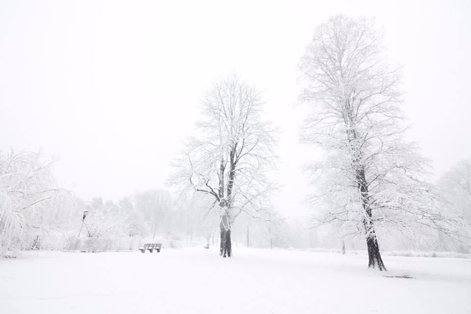 【爱摄影】雪花纷飞_图1-6